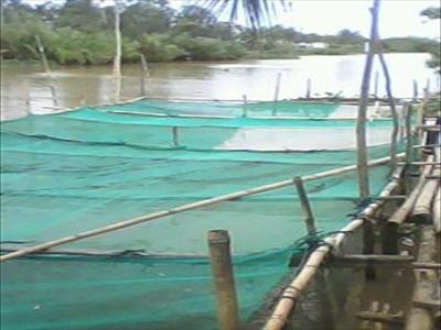 Sử dụng thuốc phòng bệnh cho tôm cá nuôi