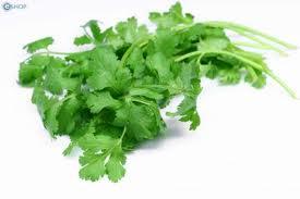 Kỹ thuật trồng rau mùi tàu (rau ngò rí)
